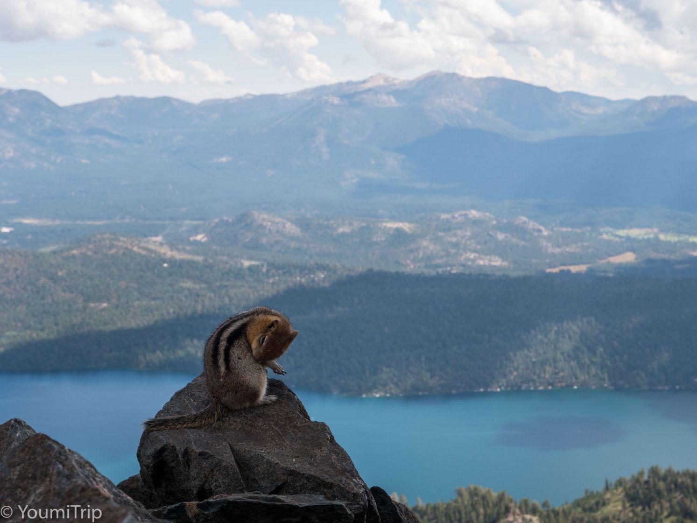 Chipmunk enjoying the view