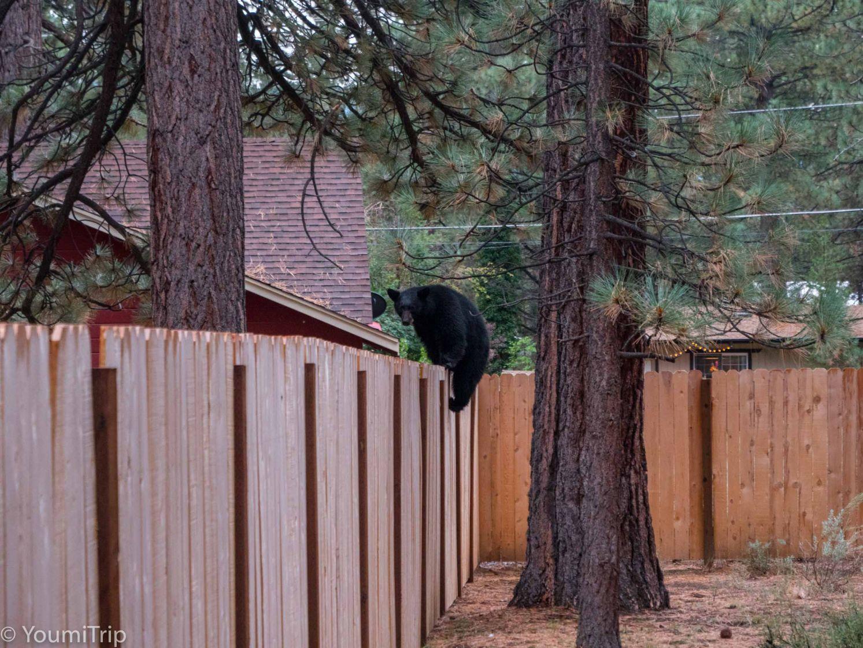 Bear on a fence